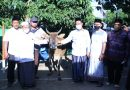 Maulid Nabi Muhammad SAW, Bupati Gresik Bagikan Tiga Ekor Sapi di Pulau Bawean